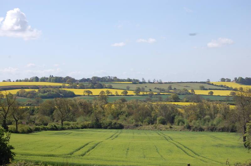 Lower Fields HI