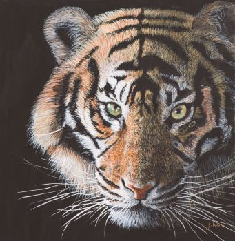 Limited Edition signed Giclee print 'Hello Tiger' 34cm x 34cm