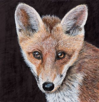 'Big Ears' the Fox cub, Giclee print size 34cm x 34cm