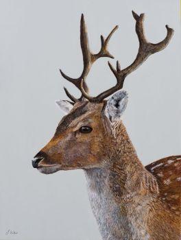 'Deer' Giclee print size 25cm x 33cm