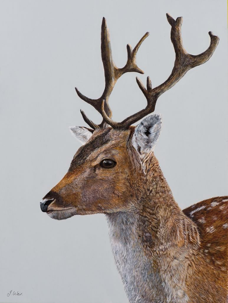 'Deer' 25cm x 33cm