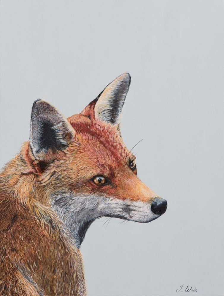 'Mr Fox' 25cm x 33cm
