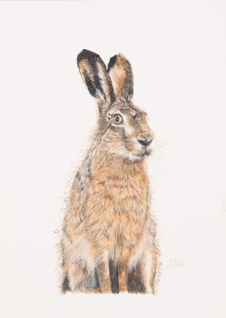 'Bad Hare Day' Giclee print  25cm x 33cm.   Finalist in BBC Wildlife Artist of the Year 2013