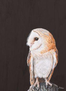 'Barn Owl' Giclee print size 25cm x 33cm