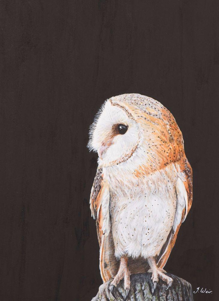 'Barn Owl' 25cm x 33cm