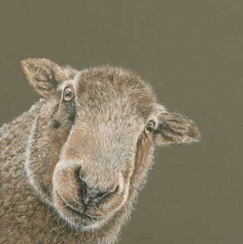 'Ewe looking at me?' Giclee print size 34cm x 34cm