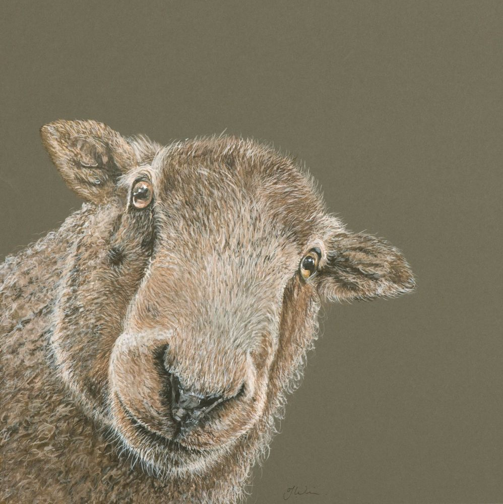 'Ewe looking at me?' 50cm x 50cm