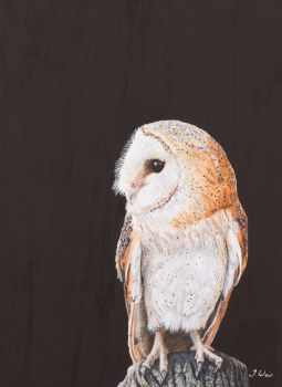 'Barn Owl' Original Painting