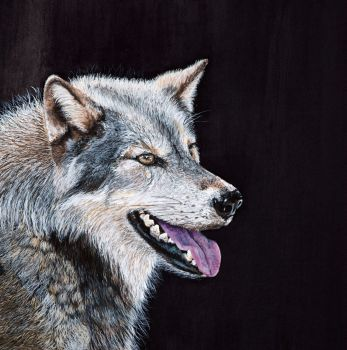 'What big eyes you have' Wolf, original painting