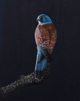 'The Waiting Kestrel' original painting