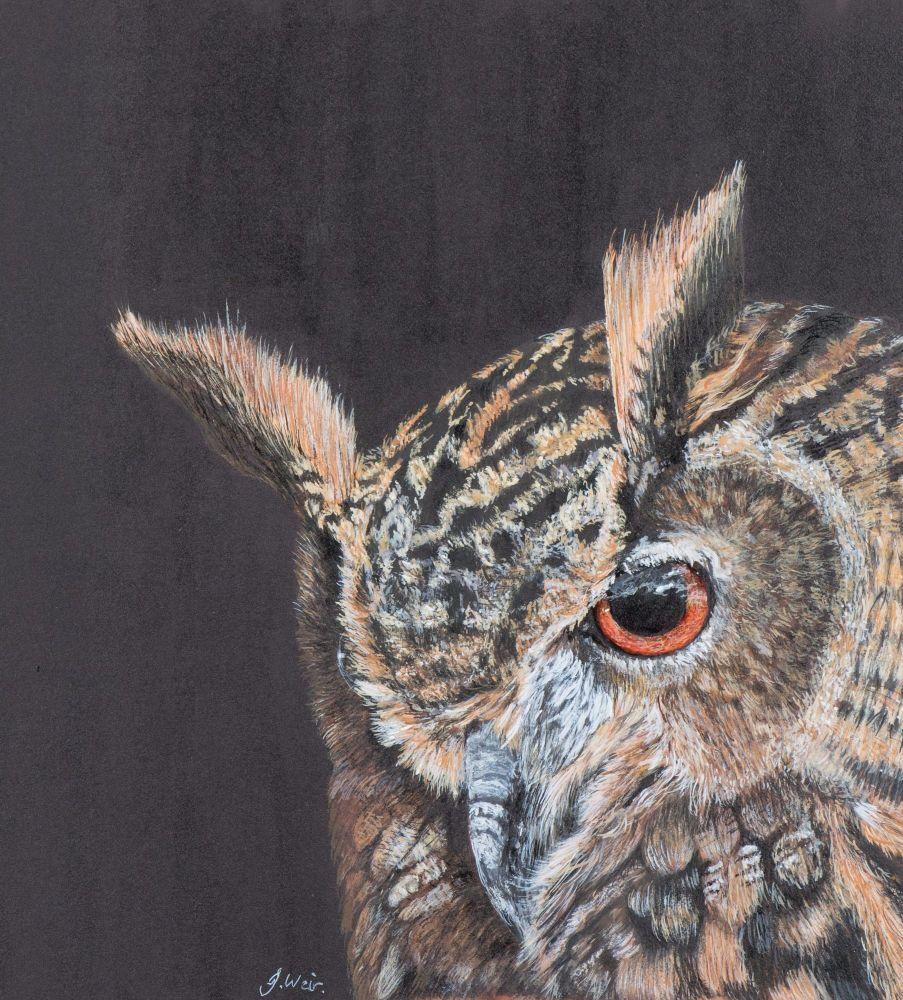 'Twit who?' European Eagle Owl.