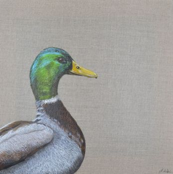'Peeping Mallard'  Original Painting