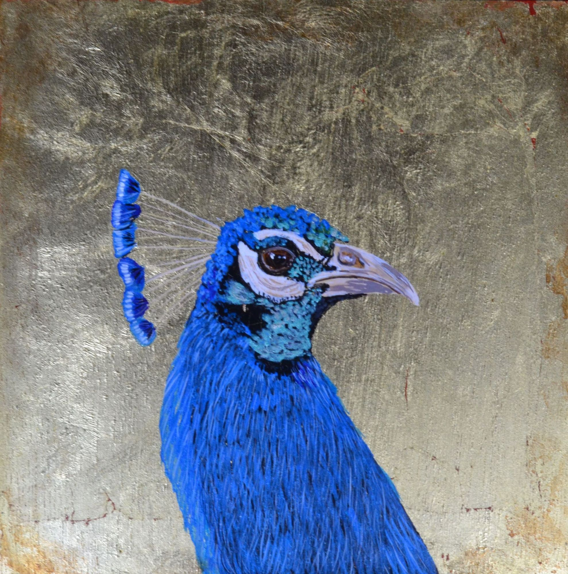 Original Blue Peacock on a gold leaf background by Julie Weir