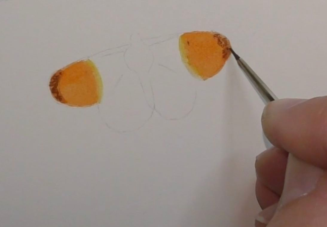 How to paint an orange tip butterfly in watercolours