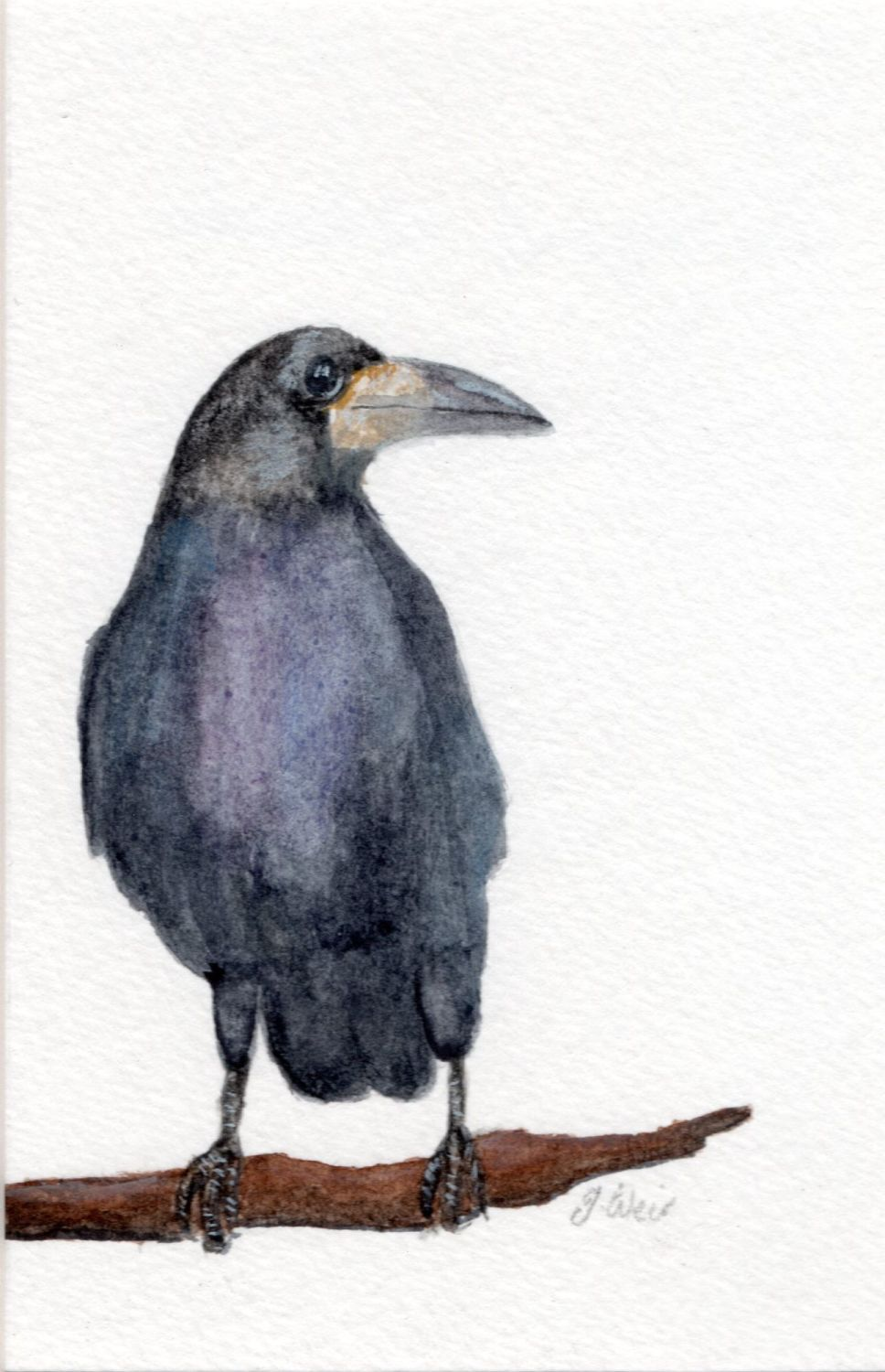 Rook, Original Watercolour.