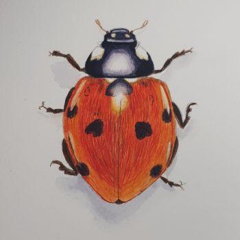 Ladybird, Ladybird. Original Watercolour.