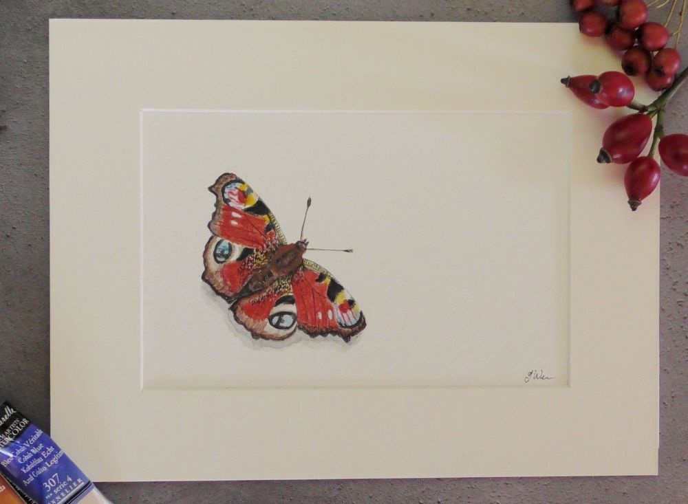 The Peacock Butterfly, Original Watercolour painting.