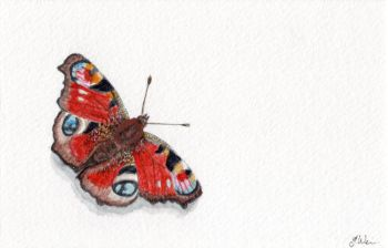 The Peacock Butterfly, Original Watercolour.