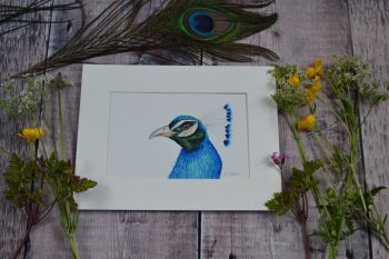 Peacock, Original Watercolour.