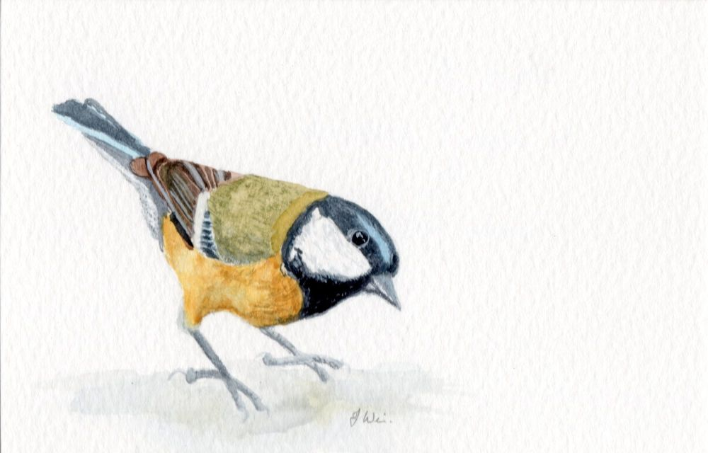 Great Tit, Original Watercolour.