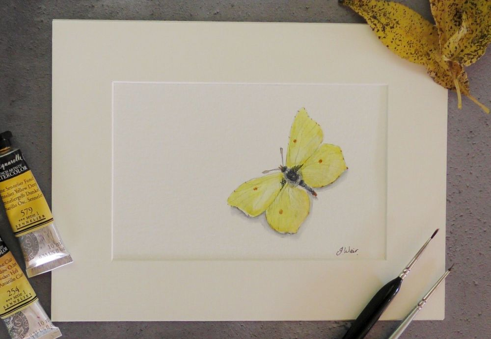 Brimstone Butterfly, Original Painting.