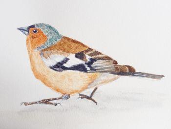 The Chaffinch, Original Watercolour.