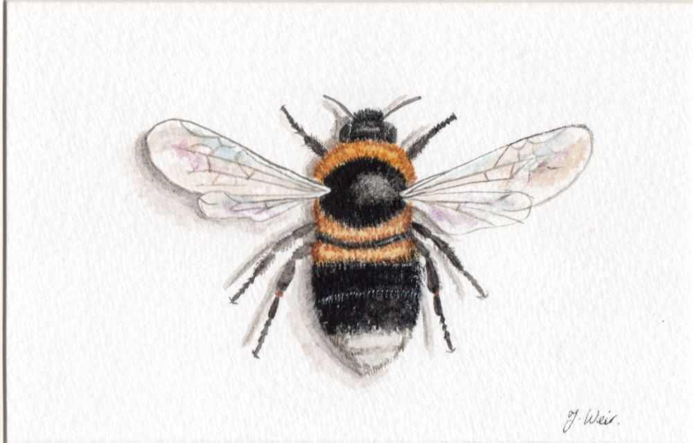 Bumblebee, Print.