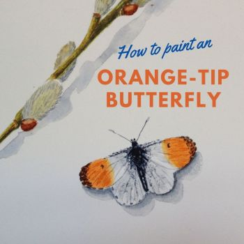 How to paint an Orange tip Butterfly.