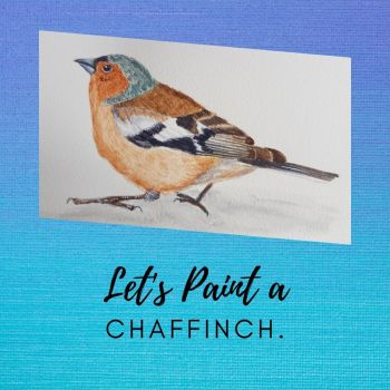 How to paint a Chaffinch.