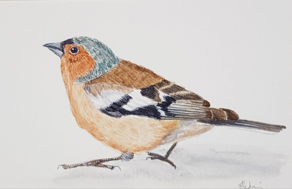 The Chaffinch, Original Watercolour.