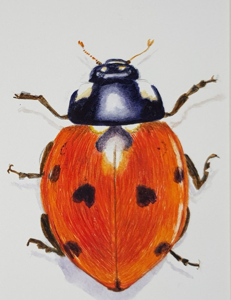 Ladybird, Ladybird. Original Watercolour.