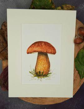 Bay Bolete Mushroom, Original Watercolour Painting.