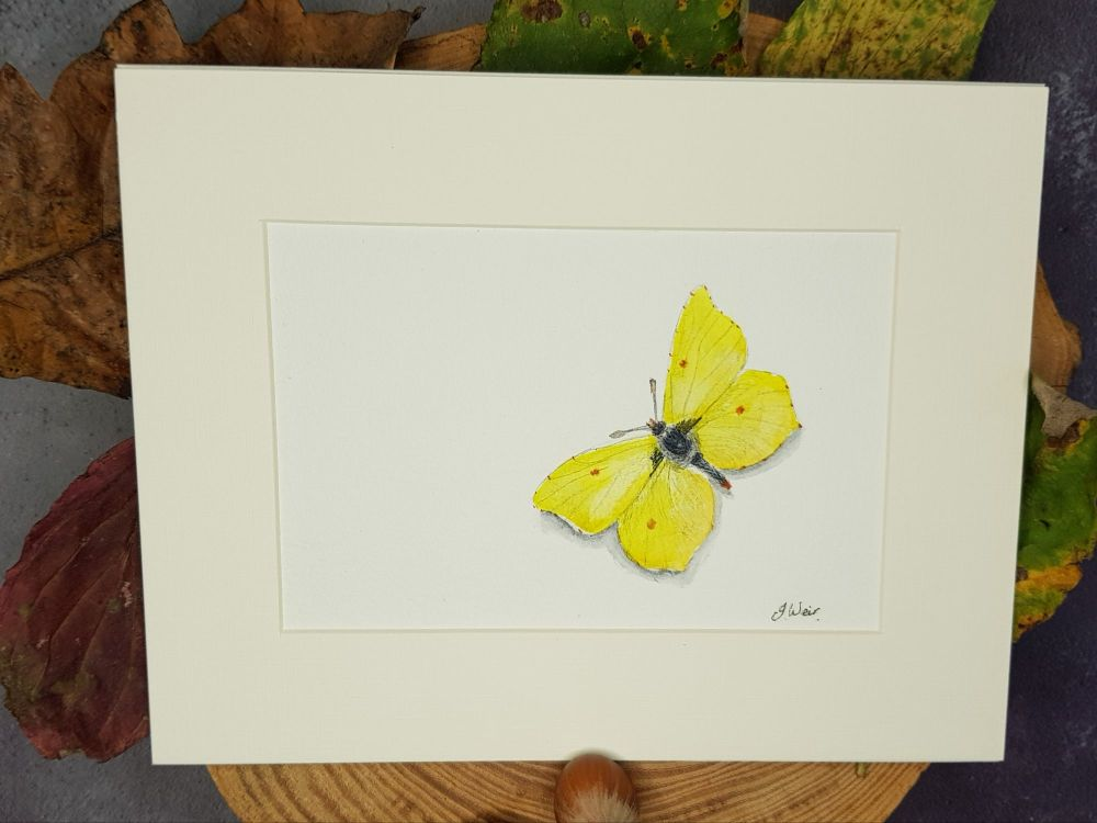 Brimstone Butterfly, Original Watercolour.