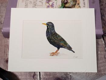 Starling Original Watercolour Painting