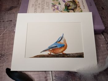 Nuthatch Original Watercolour Painting
