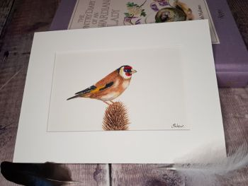 Goldfinch Original Watercolour Painting.