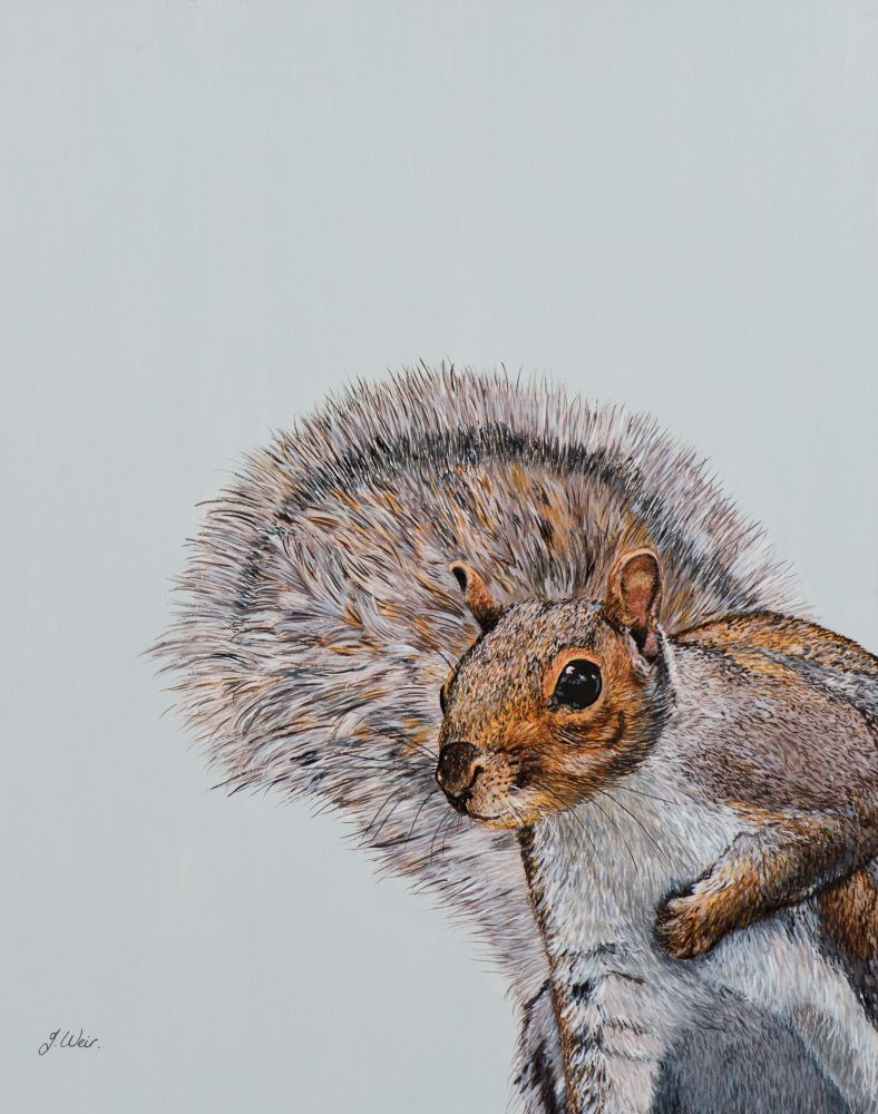 'Cyril the Squirrel' Giclee print size A4 25cm x 33cm