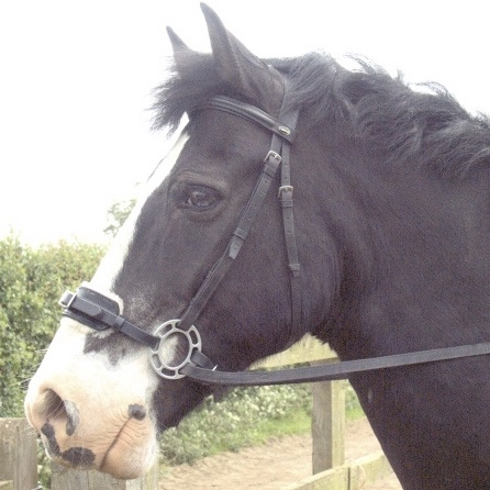 <!--001-->Orbitless Bridles