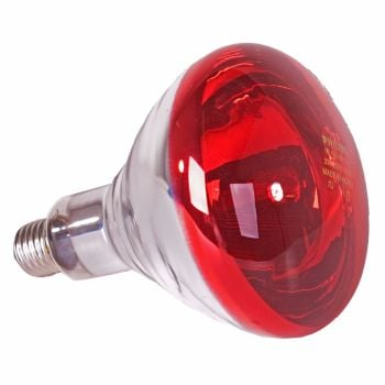 Heat Lamps Thermostatic Heat Lamp And Brooders For Poultry