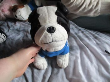 Black / White British Bulldog with T-Shirt - Soft Sensations - Soft Toy