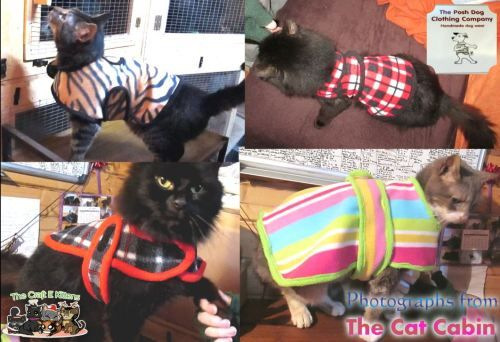 cats in jackets