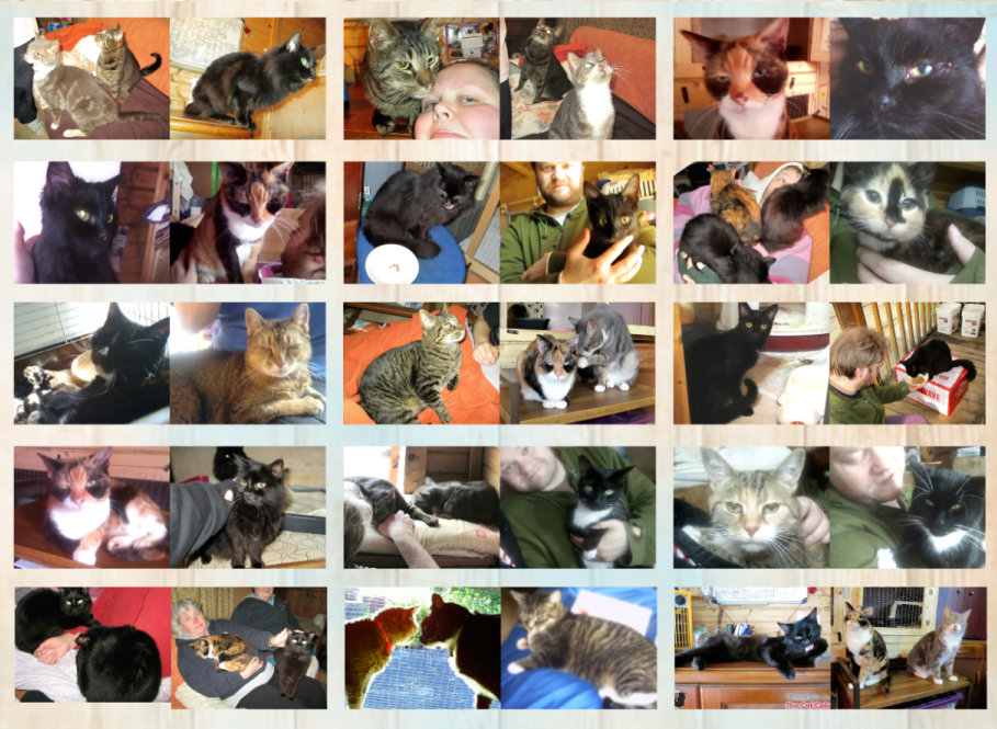 All generations of The Craft-E-Kittens. Your funds help keep us afloat, and them well fed and cared for.