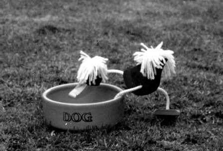 Dog Bowl 3