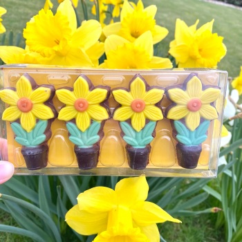 Daffodils - Milk Chocolate