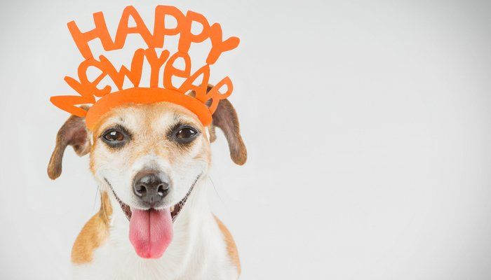 New-Year's-Resolutions-Ideas-for-Dog-Owners