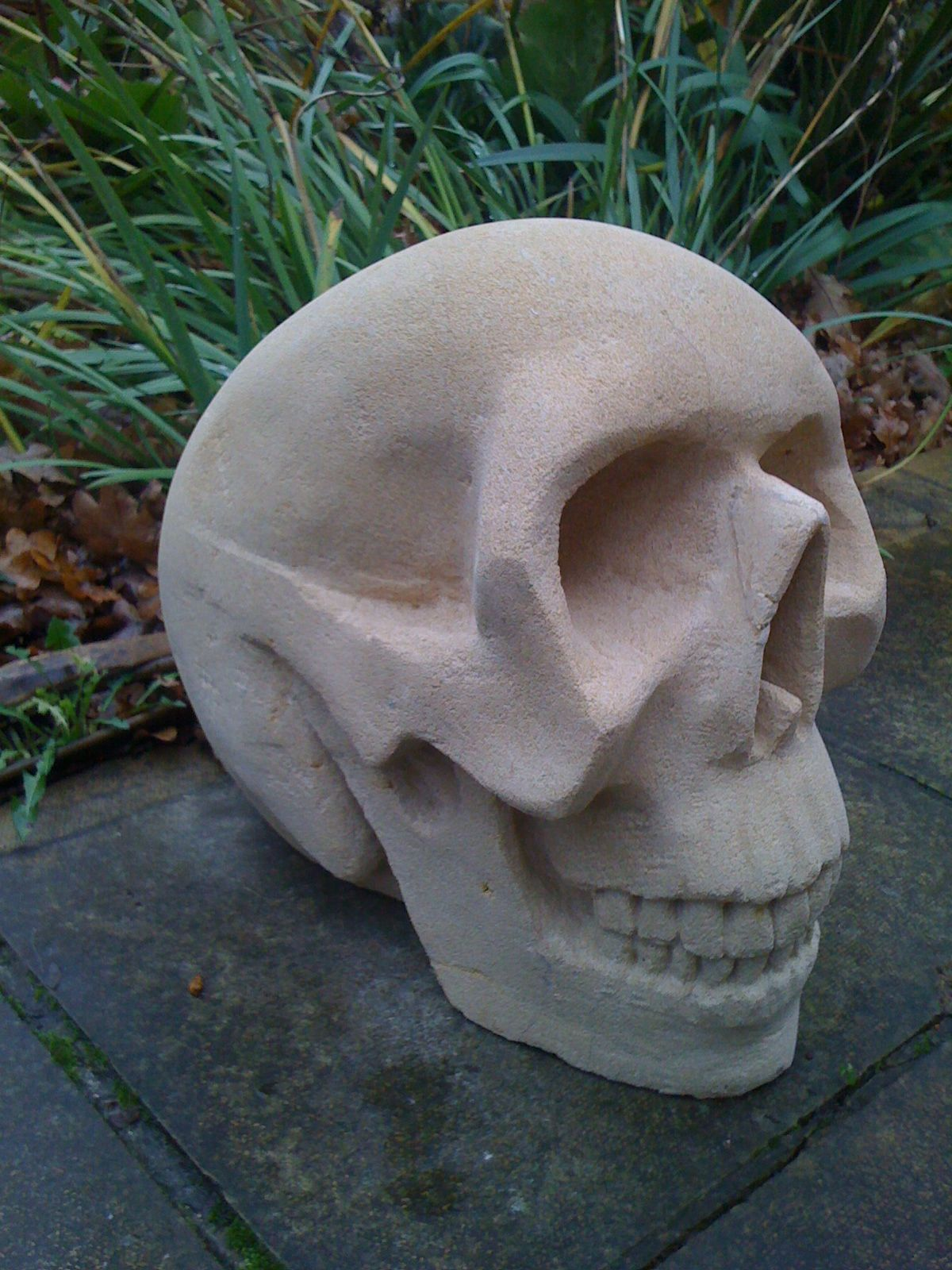 Skull finished right side