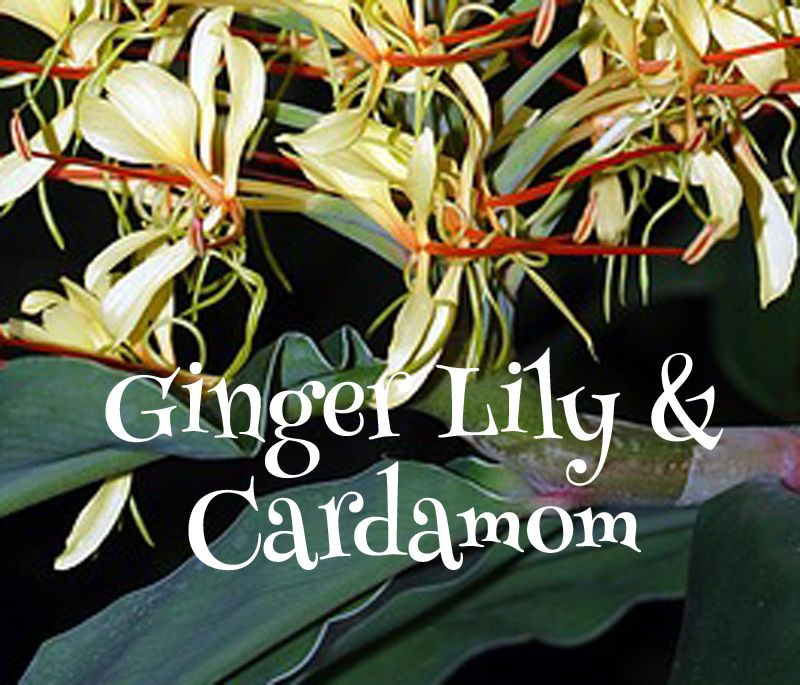 Ginger Lily and Cardamom Scented Melts