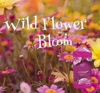 Lenor Wild Flower Bloom Dupe Aroma Wax Melts