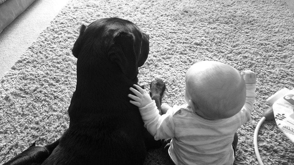 Black labrador and baby