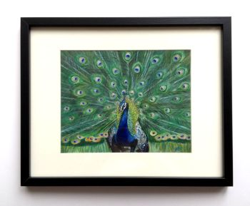 Peacock Glory Framed Painting